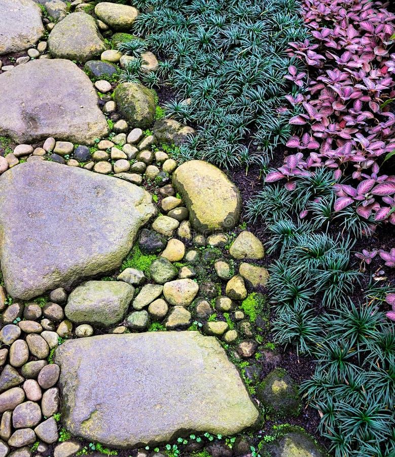 Percorso di pietra del piede della ghiaia su Zen Garden con la fiamma Violet Plant dell'ornamentale e di Mondo Grass immagine stock
