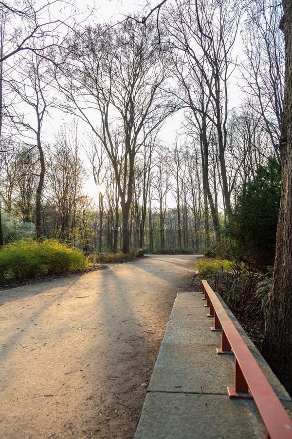 Percorso e banco in un parco al tramonto fotografia stock libera da diritti