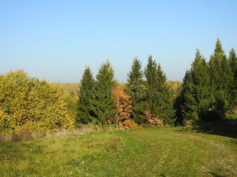 Percorso e bei alberi di autunno, Lituania fotografie stock libere da diritti