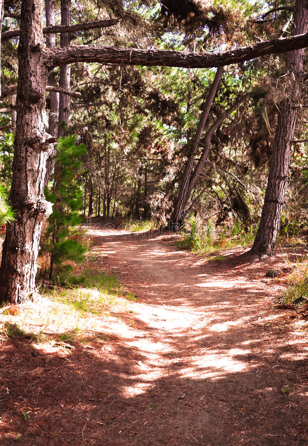 Percorso in foresta immagini stock libere da diritti