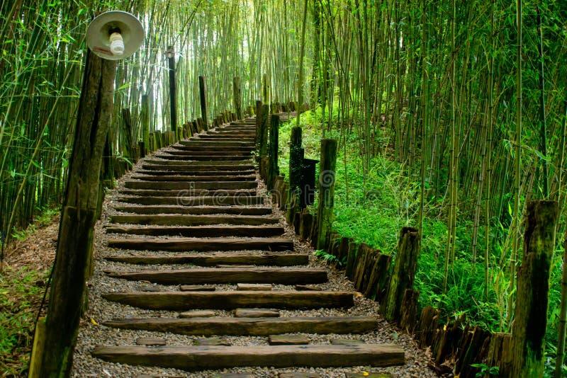 Percorso in foresta di bambù verde fotografia stock libera da diritti