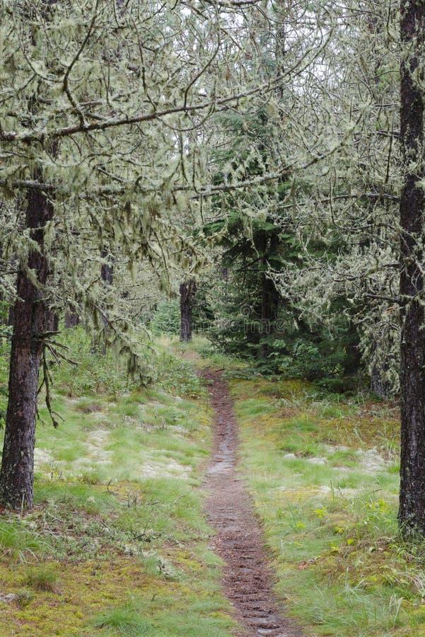 Percorso in foresta piena di sole fotografie stock