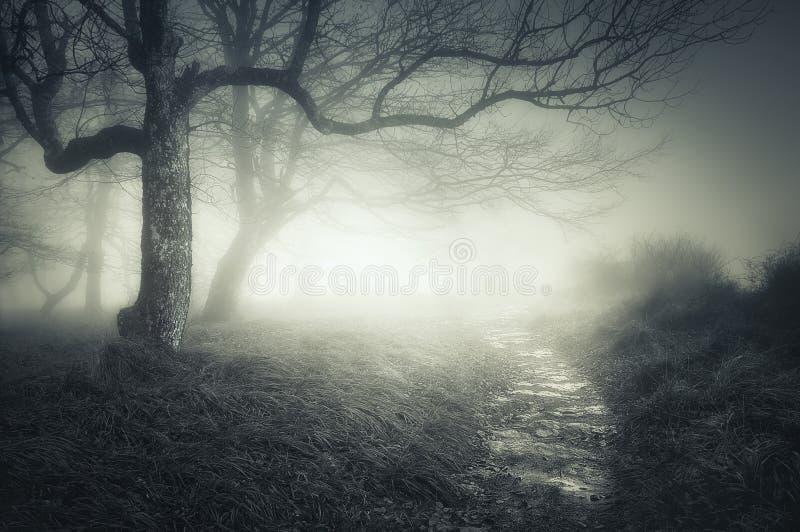 Percorso in foresta scura e spaventosa fotografia stock