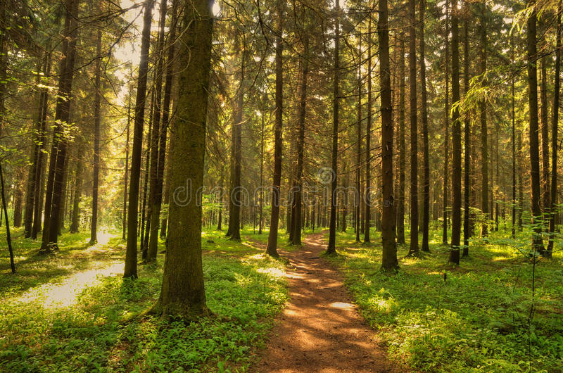 Percorso in foresta selvaggia immagine stock