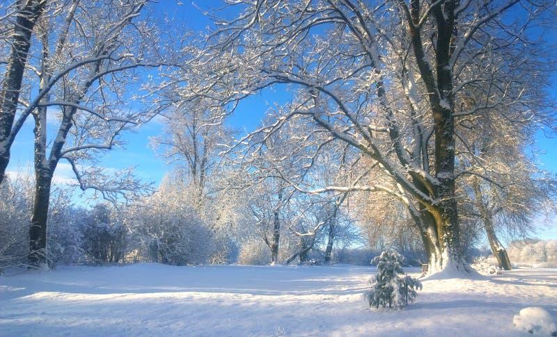 Percorso innevato nel parco Piccolo albero sotto la neve fotografie stock