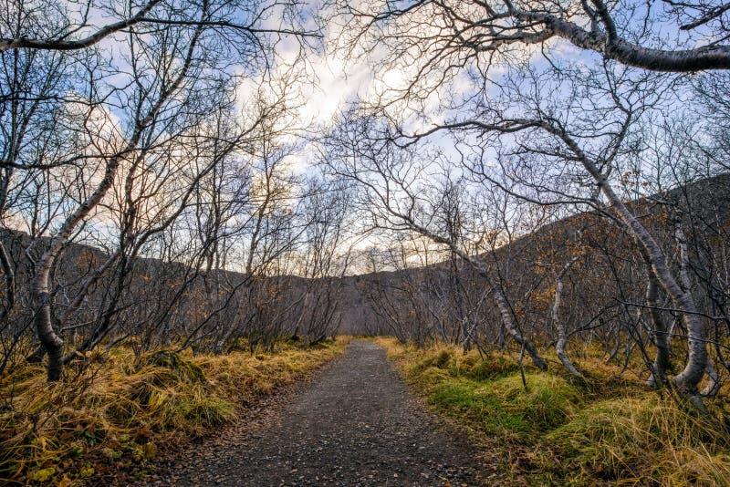 Percorso islandese fotografie stock