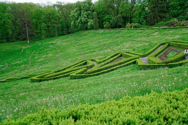 Percorso labirinto e della pietra verdi del giardino con erba che cresce fra le pietre Particolare di un giardino botanico fotografia stock libera da diritti