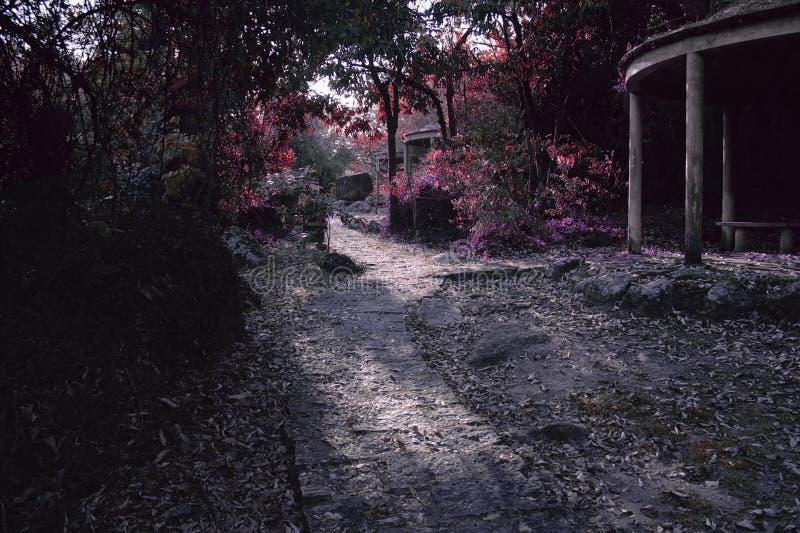 Percorso leggiadramente di colore su una foresta magica fotografia stock libera da diritti
