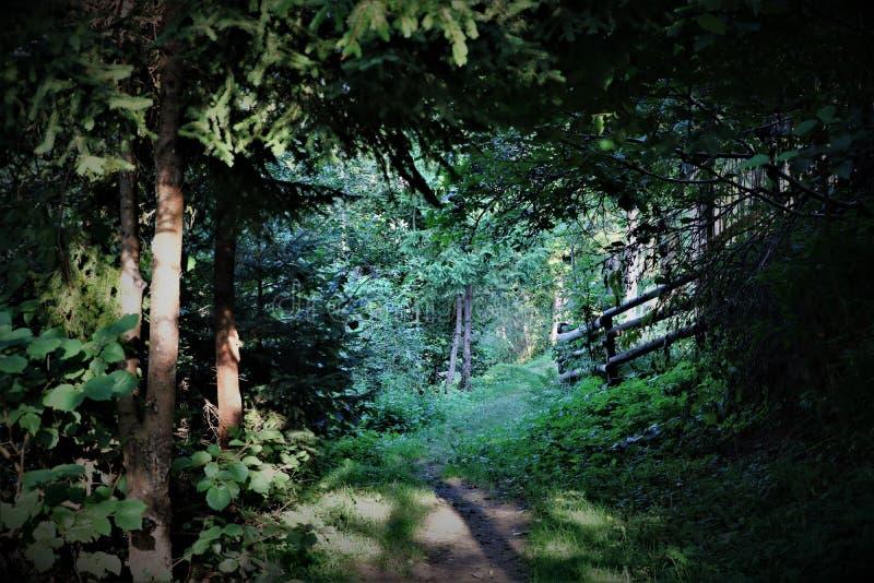 Percorso misterioso magico protetto, percorso in sottobosco scuro fotografie stock