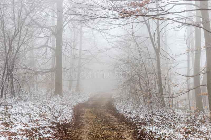 Percorso in nebbia fotografia stock