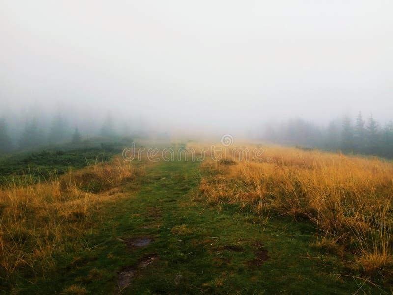 Percorso nebbioso fotografie stock