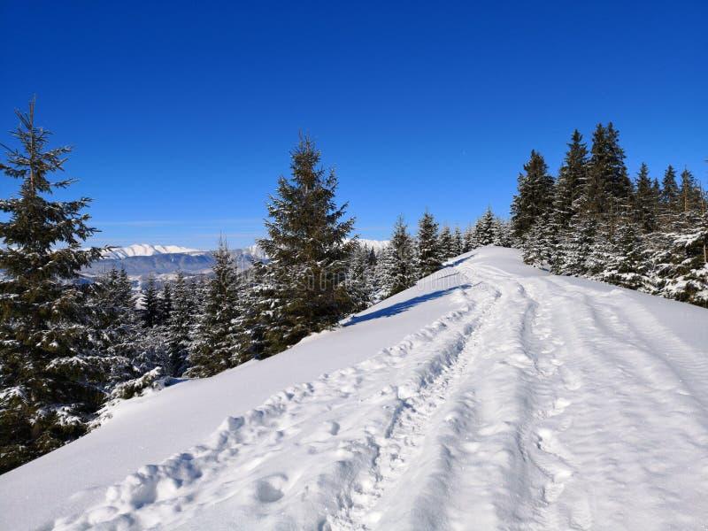 Percorso negli abeti nevosi della foresta sotto neve immagini stock
