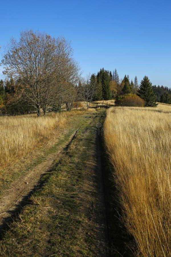 Percorso nel campo in montagne di Gorce, Polonia di autunno fotografia stock libera da diritti