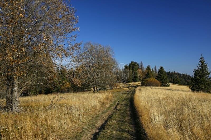 Percorso nel campo in montagne di Gorce, Polonia di autunno fotografia stock