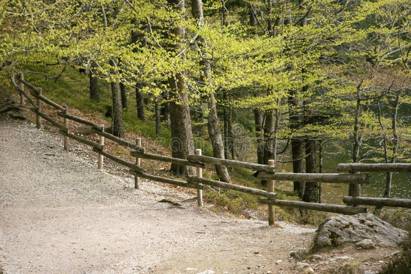Percorso nel legno in primavera Di legno recinti il paesaggio selvaggio della foresta Traccia di aumento della montagna Latifogli immagini stock libere da diritti