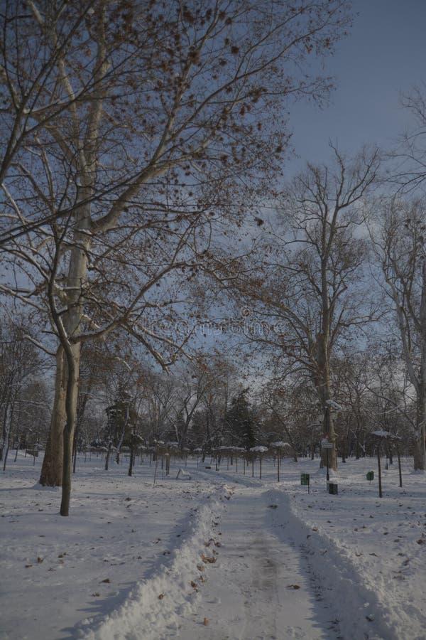 Percorso nel parco con neve immagine stock