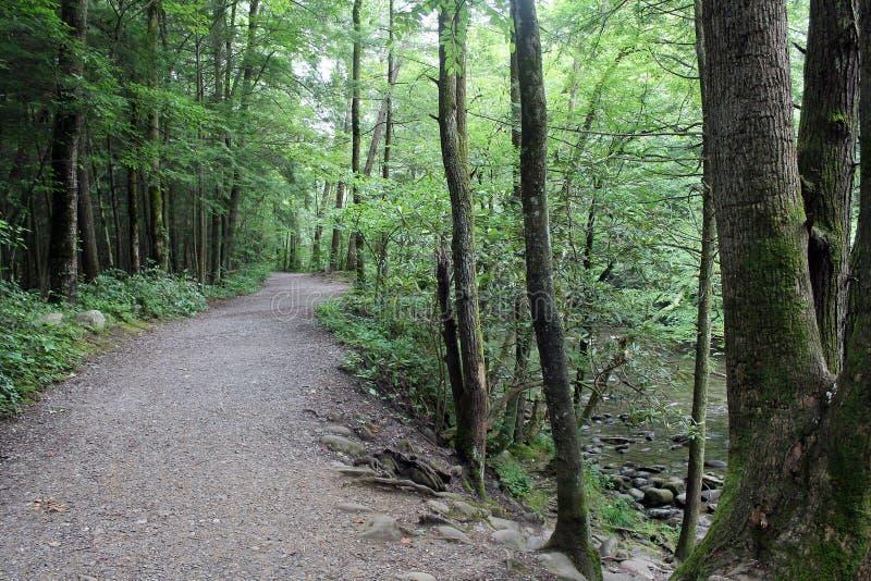 Percorso nel parco nazionale di Great Smoky Mountains immagini stock