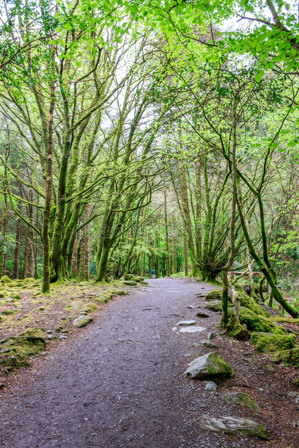 Percorso nel parco nazionale di Killarney immagine stock