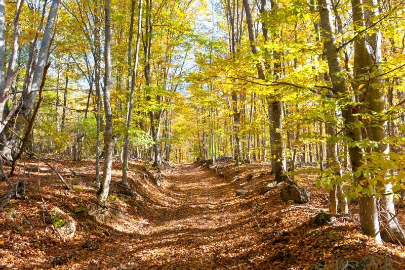 Percorso nella foresta di autunno