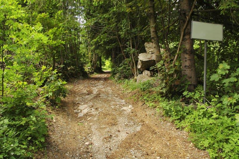Percorso nella foresta (Piemonte) fotografie stock