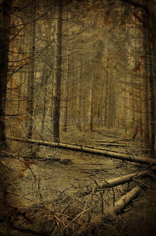 Percorso nella foresta scura terrificante dell'albero di abete fotografie stock libere da diritti