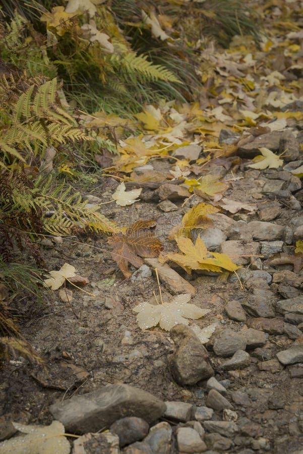 Download Percorso Nella Foresta Stagione Di Autunno Fotografia Stock - Immagine di particolari, percorso: 102093222