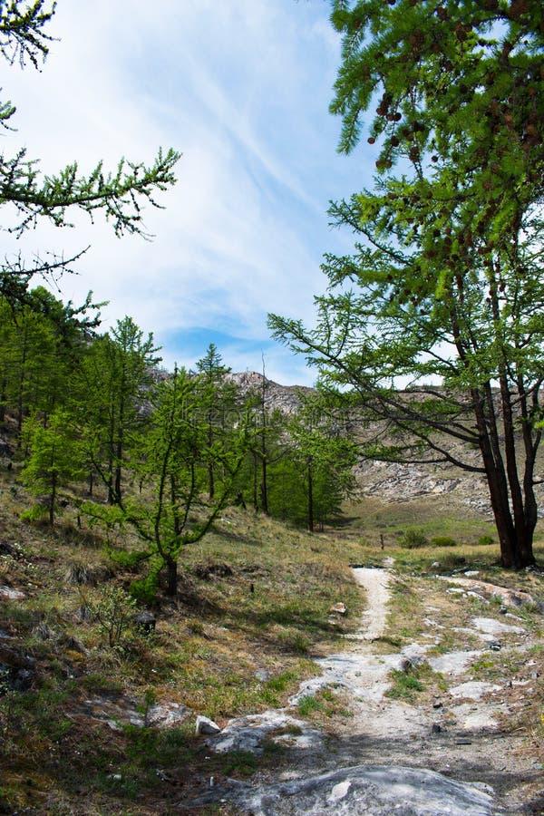 Percorso nella foresta verde con gli alberi e le montagne avanti fotografia stock