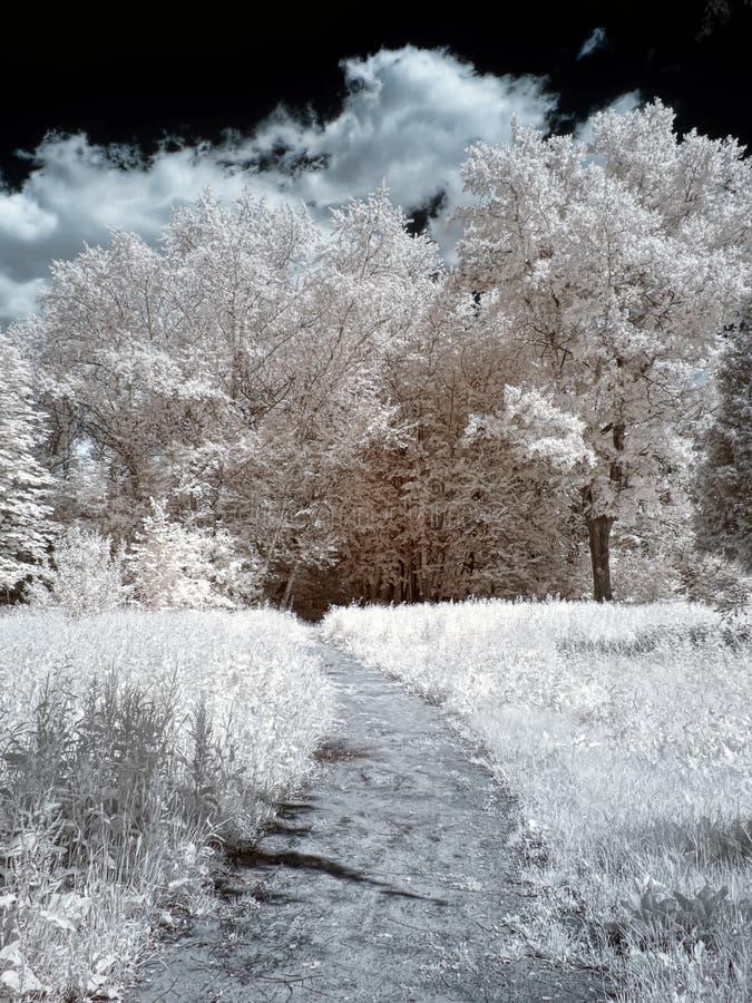 Percorso nella sosta Fotografia all'infrarosso fotografia stock