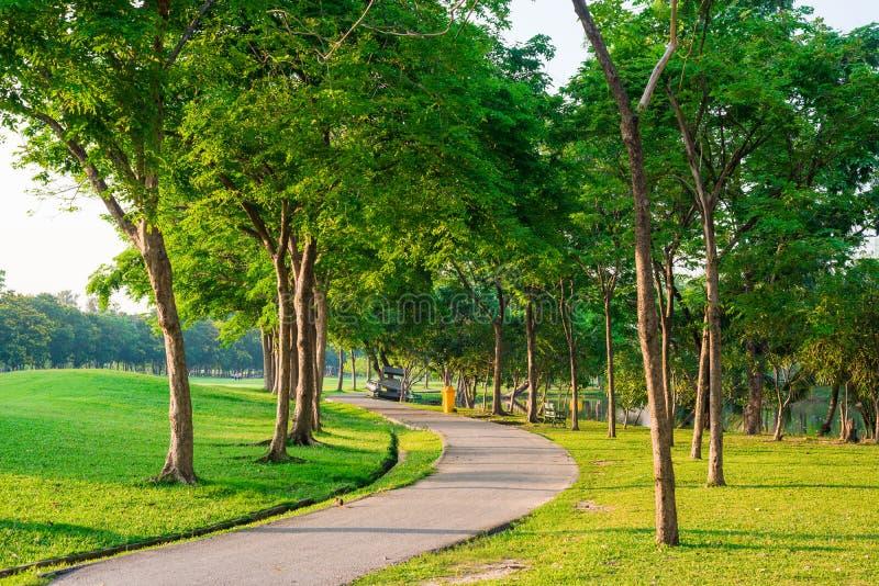 Percorso pavimentato che curva attraverso il parco Via pacifica immagine stock