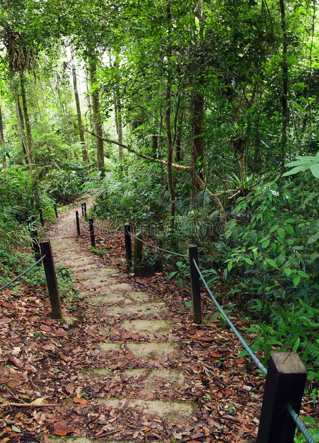 Percorso Roped della giungla per trekking sicuro in montagne fotografia stock