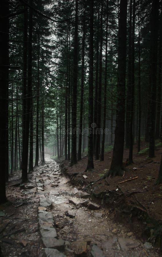 Percorso scuro nella foresta immagine stock libera da diritti