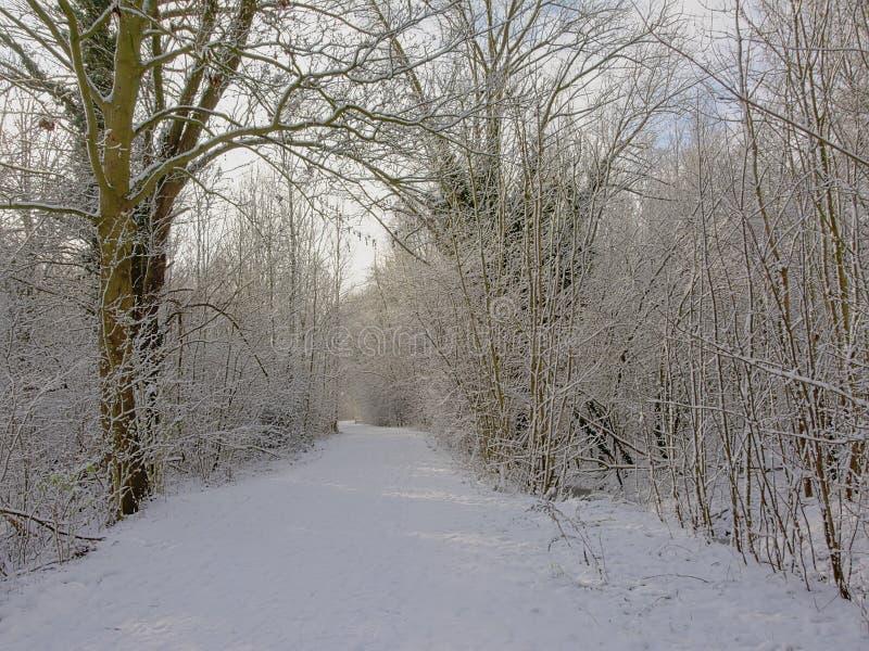 Percorso tramite un tunnel degli alberi e degli arbusti nudi di inverno, coperto in neve fotografia stock libera da diritti