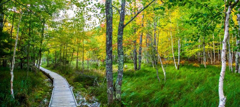 Percorso tranquillo con i colori di caduta del parco nazionale di acadia fotografie stock