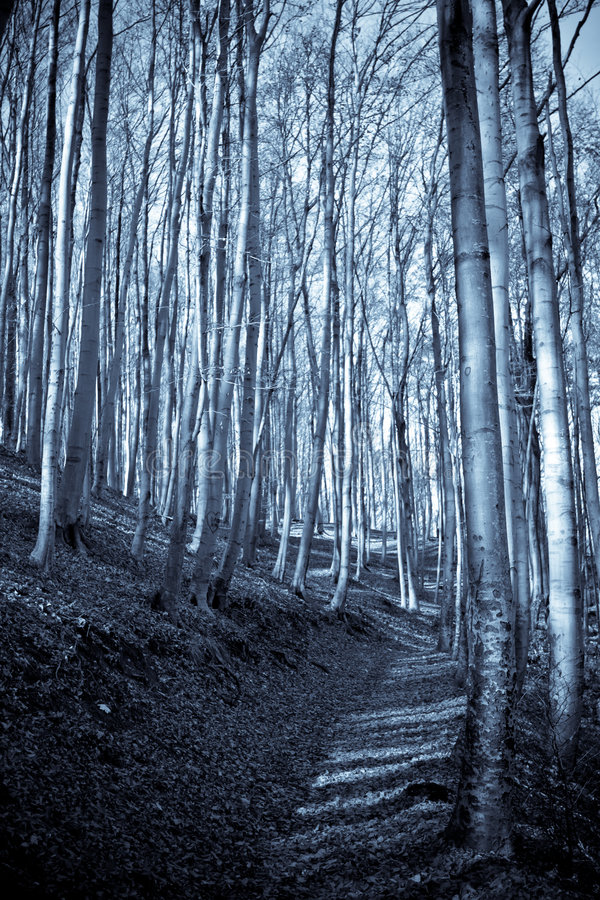 Download Percorso in una foresta fotografia stock. Immagine di closely - 7304222