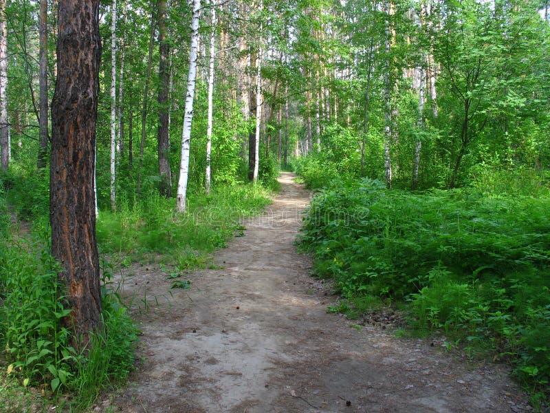 Percorso in una foresta mista. Paesaggio di estate immagini stock libere da diritti