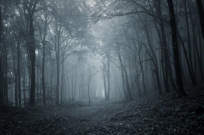 Percorso in una foresta misteriosa scura con nebbia immagine stock libera da diritti