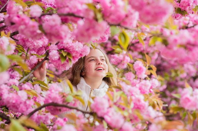 Perdido en flor Concepto de la bot?nica Muchacha que goza de la flor de cerezo Sakura Ni?o lindo disfrutar de d?a de primavera ca imagen de archivo
