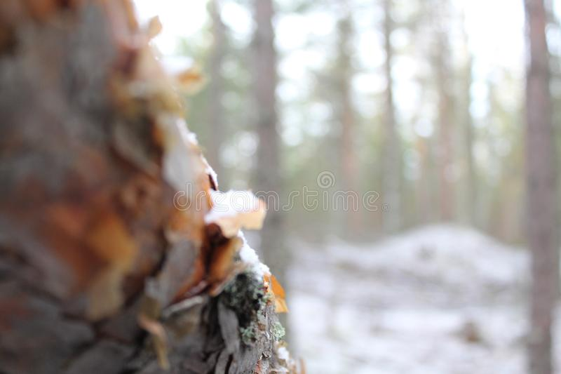 Perdido na floresta fotos de stock royalty free