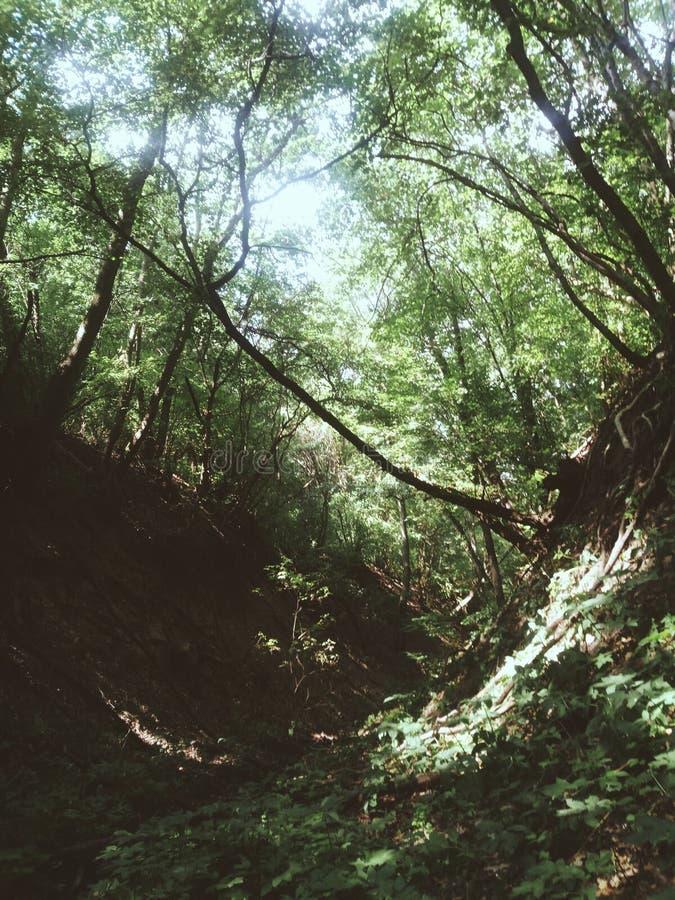 Perdido na floresta imagem de stock