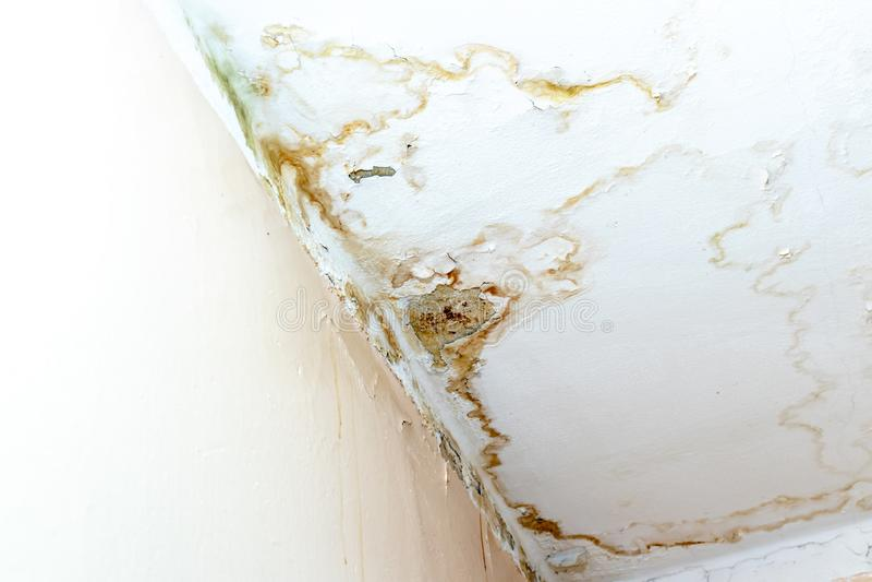 Perdite dell'acqua piovana sul soffitto a causa del tetto nocivo che causa decadimento, sbucciando pittura e ammuffito immagine stock