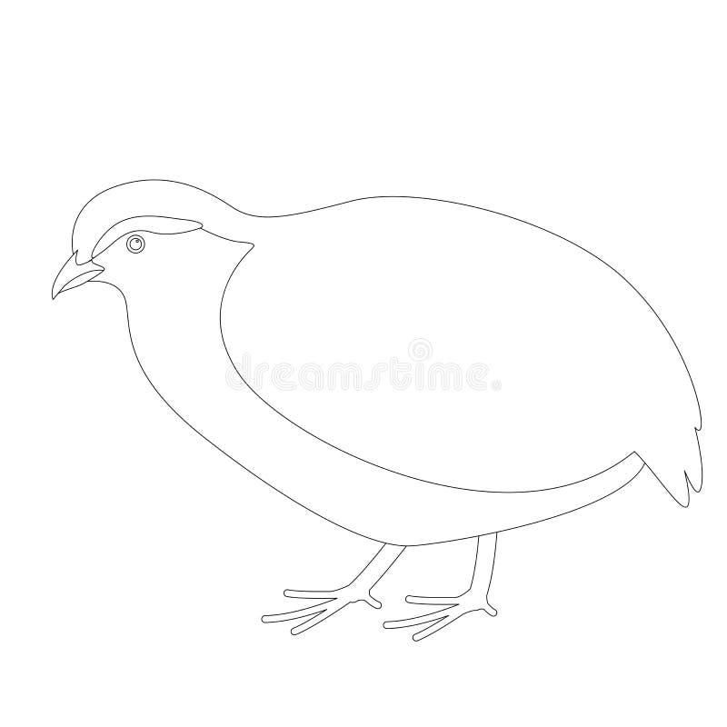 Perdiz, ilustração do vetor, alinhando a tração, perfil ilustração stock