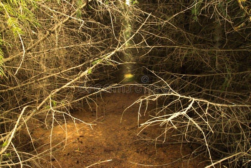 Perdu dans la forêt effrayante images libres de droits