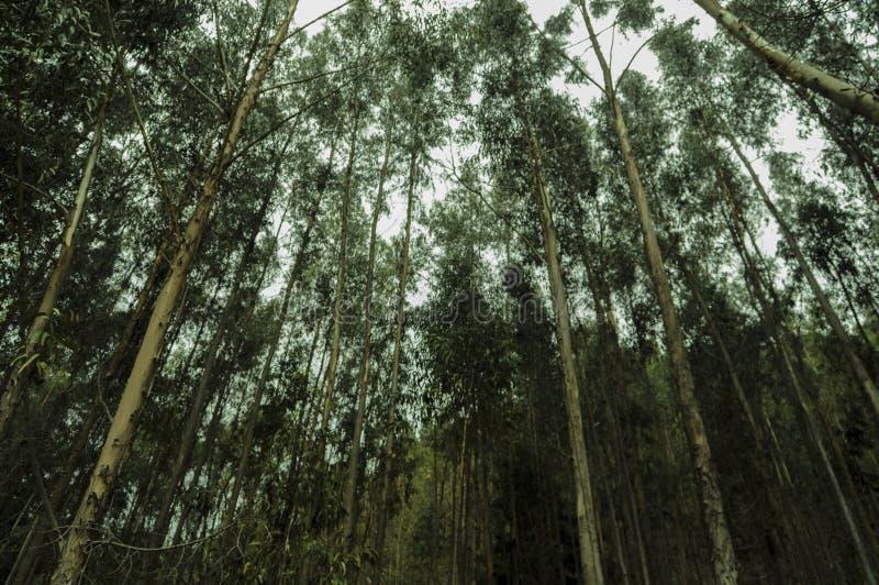 Perdu dans la grande forêt photo libre de droits