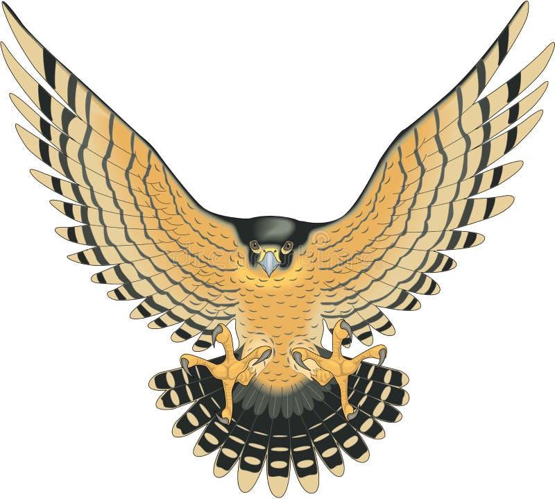 Peregrine Falcon Attacking Illustration royalty-vrije illustratie