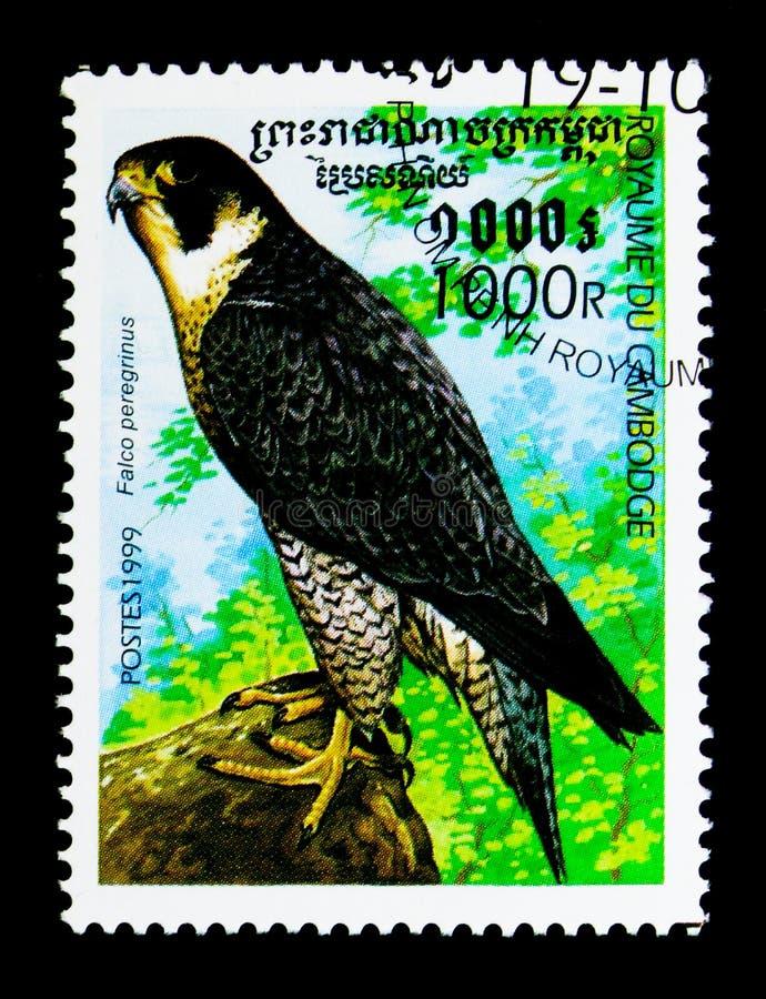Peregrine Falcon Falco peregrinus, Birds of prey serie, circa 1999 stock photography
