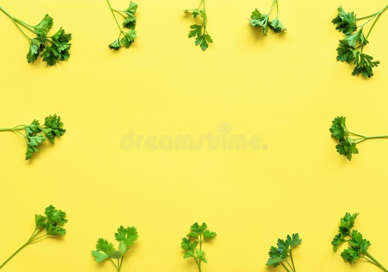 Perejil aislado Capítulo del perejil en un fondo amarillo Hojas verdes claras jugosas del perejil Endecha plana de las hierbas, v imágenes de archivo libres de regalías