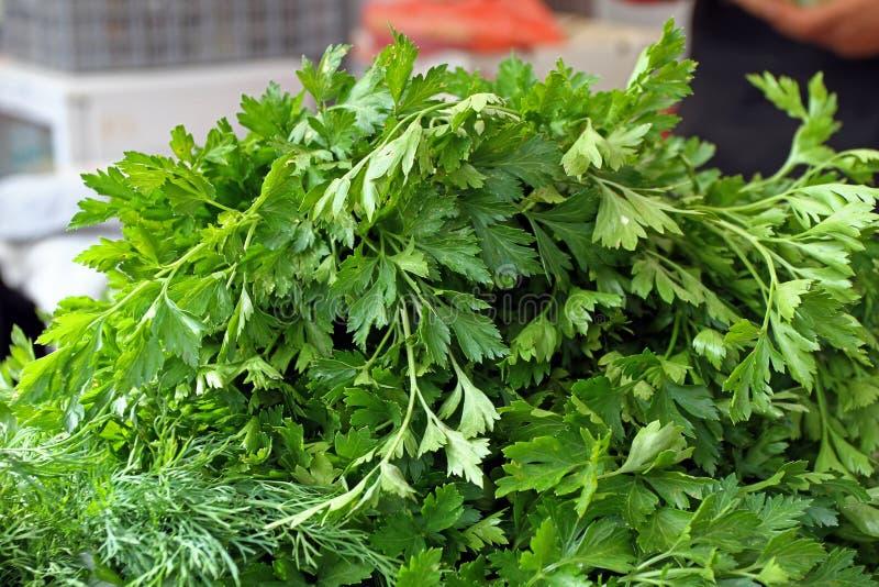 Perejil orgánico fresco Textura del fondo del perejil Modelo de las verduras Papel pintado verde del eneldo Hierba verde Consumic foto de archivo