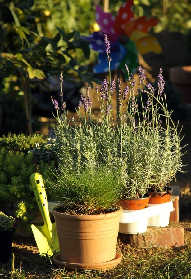 Perenial und Krautpflanzen lizenzfreies stockfoto
