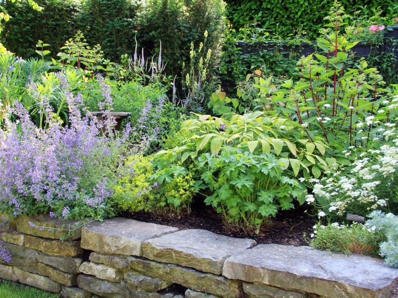 perennial del giardino immagine stock libera da diritti