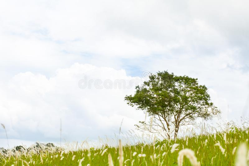 Perennial among flowers of grass royalty free stock images